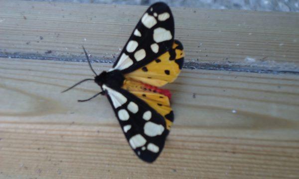 Port des Salines – Oléron – papillon